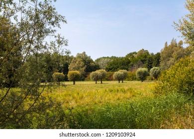 Beautiful nature in the Biesbosch