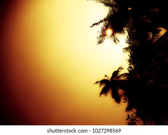 Beautiful Nature with Cocunut Trees and Sun