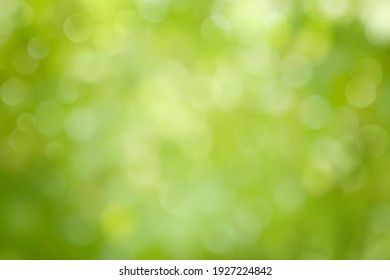 Beautiful Nature defocused bokeh green background, texture. Blurred crown trees in garden close-up. Natural spring backdrop With Copy Space for design