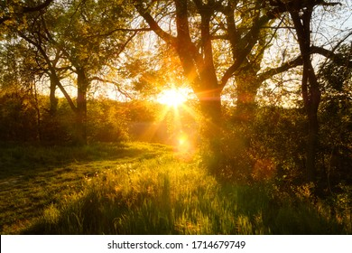 Beautiful nature at evening in spring forest trees with sun rays