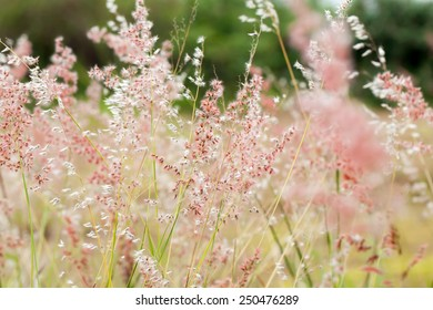 Beautiful Nature Flower background