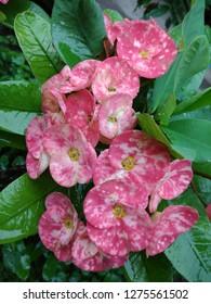 Beautiful Nature Flower Wallpepar