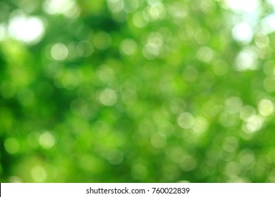 Beautiful nature, green background, round bokeh