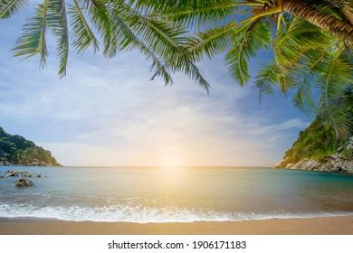 beautiful nature green palm leaf on tropical beach