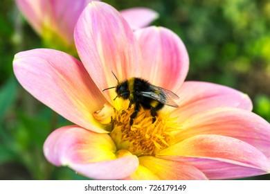 Beautiful nature, Hornet on flower