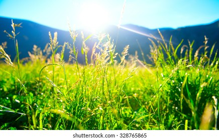 Beautiful nature landscape - Alpine meadow. Grass closeup with sunbeams. Beautiful Nature landscape