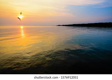 Beautiful nature landscape for background bright sun golden sunlight reflect the water, two birds a pair of seagulls flying on yellow, orange sky at sunset over the sea and horizon at Bangpu, Thailand