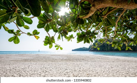 Beautiful nature landscape beach and sea under the sunlight in summer, tree with large green leaves of the Terminalia catappa at Koh Tarutao, Tarutao National Park, Satun, Thailand