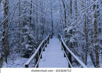 Beautiful nature and landscape photo of Swedish winter forest and trees. Nice cold day in the wood. Lovely details of branches with snow,frost and wooden bridge. Calm, peaceful outdoors image.