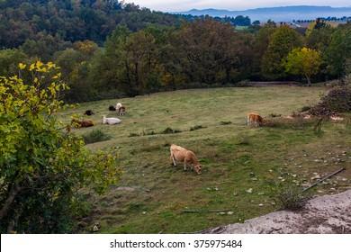 Beautiful nature landscape with vivid colors. cows on pasture