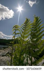 beautiful nature leaf