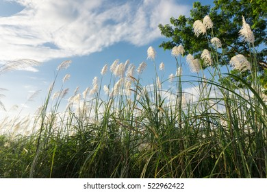 Beautiful nature meadow flower grass with sunbeams and blue sky