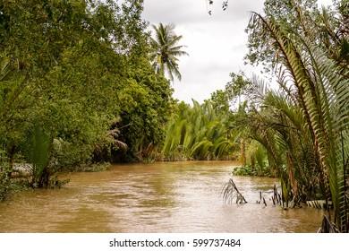 Beautiful nature of Mekong Delta in Vietnam