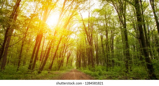 Beautiful nature in the morning forest