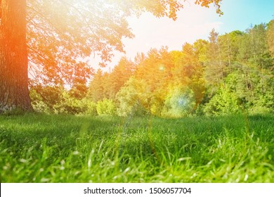 beautiful nature in the park on nature background