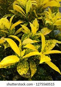 Beautiful Nature Plant Wallpepar