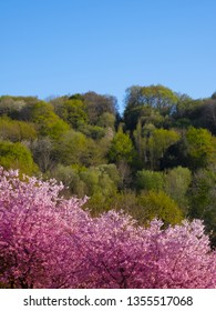 Beautiful nature scene with blooming tree in spring