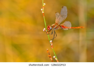 Beautiful nature scene dragonfly.