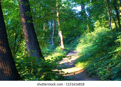 Beautiful nature. Scenic landscape. Path in summer forest in the sunlight.