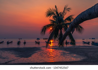 Beautiful nature scenic landscape sunset beach silhouette coconut palm tree and boat at Koh Tao, Amazed landmark tourist travel Thailand summer holiday vacation trips, Tourism destinations place Asia