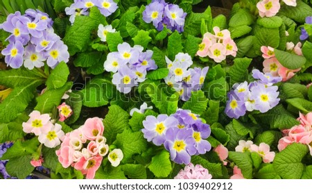 Beautiful Nature Spring Floral Wallpaper Background Stock Photo