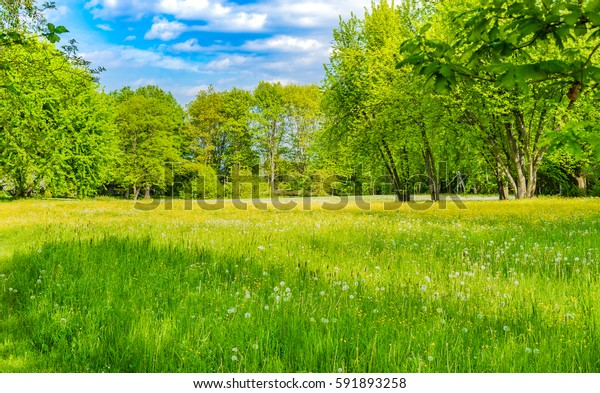 Beautiful nature spring landscape with fresh green meadow and deciduous trees at the edge of forest.