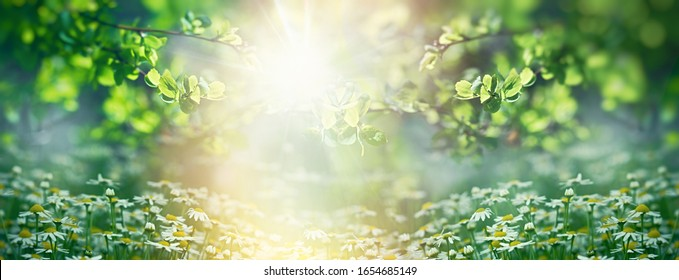 Beautiful nature in spring, young spring leaves and chamomile