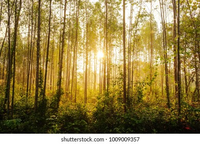 beautiful nature of sunset landscape with sunbeam through forest in summer of Thailand.