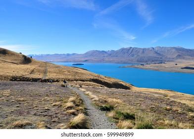 Beautiful Nature surrounding Lake Tekapo, New Zealand