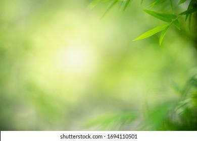 Schöne Natursicht auf grünes Blatt auf unscharfem grünem Hintergrund im Garten mit Kopienraum als Sommerhintergrund Naturgrüne Blätter Pflanzenlandschaft, Ökologie, frisches Tapetenkonzept.
