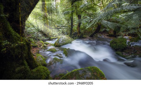 Beautiful nature with vivid green rainforest and sun flare.