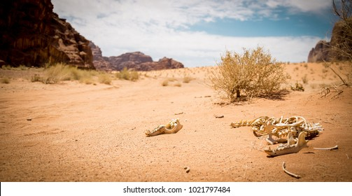 Beautiful Nature in Wadi Rum