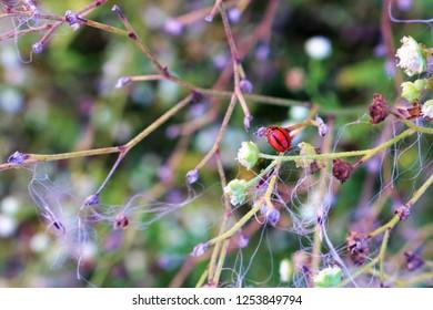 Beautiful nature walpaper