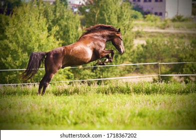 beautiful and naughty horse jumps over a fence from a paddock while escaping from the stable - Shutterstock ID 1718367202