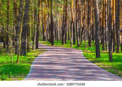 beautiful nice road through a pine forest