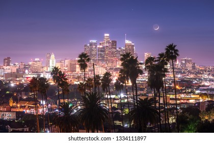 Beautiful night of downtown Los Angeles and palm trees in foreground