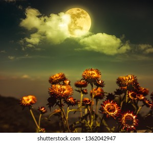 Beautiful night landscape of sky with full moon behind clouds above dry straw flowers. Serenity nature background.  Vintage effect tone. The moon taken with my own camera.