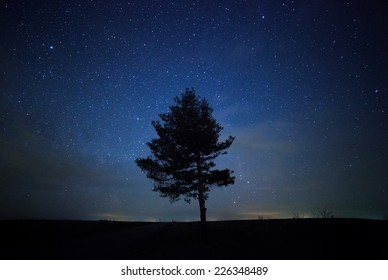 a beautiful night sky, the Milky Way and the trees