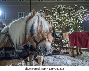 The beautiful night view of decorated gardens during Christmas time with standing horses captured in winter city centre of Salzburg. Salzburg, Austria