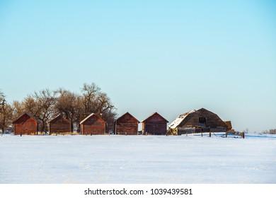 Beautiful Old Barns on Frozen Fields