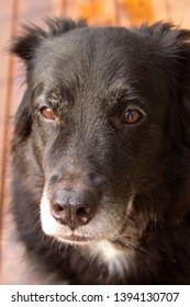 A beautiful, old, black dog's expressive face