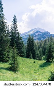 Beautiful old forest in the mountains. Zabljak. Montenegro