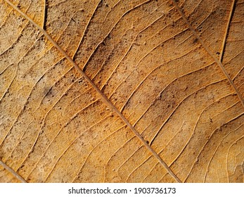 Beautiful old leaf background immage