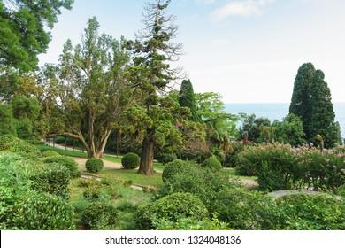 Beautiful old Park on the black sea. Crimea, Alupka, Yalta