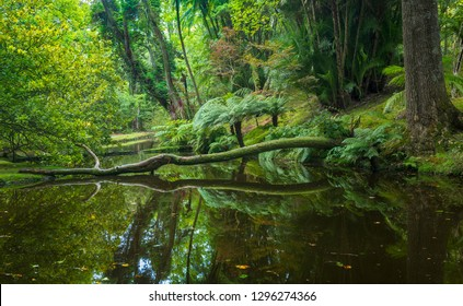 Beautiful old park in Terra Nostra botanical garden on Sao Miguel Island, Azores, Portugal