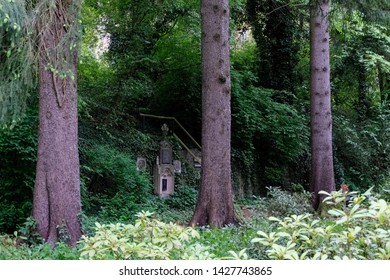 Beautiful old trees, public park of Steinfeld abbey, Germany