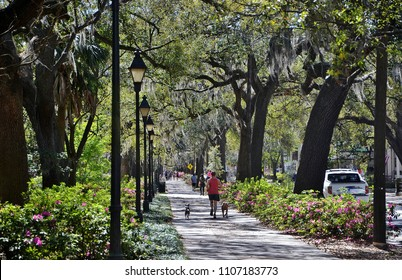 Beautiful old trees and walking paths through the parks in Savannah Georgia
