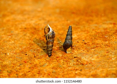Beautiful old two snails kept on a soil surface unique photo