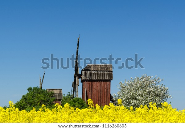 Beautiful old wooden windmills by spring season at the swedish island Oland