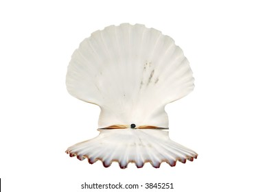 beautiful open shell isolated on white background